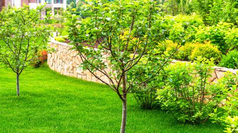 Aj S Tree Service And Landscaping Llc Cartersville Powder Springs Ga